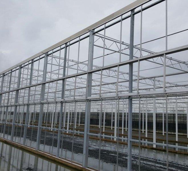 Nobutec-Thomas-Plants-1-04