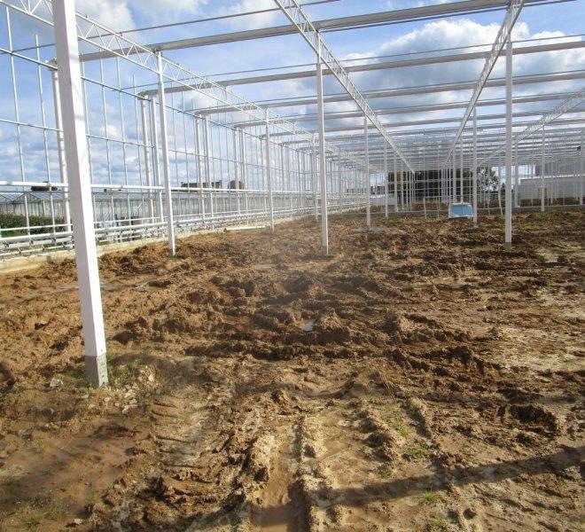 Nobutec-Thomas-Plants-2-03